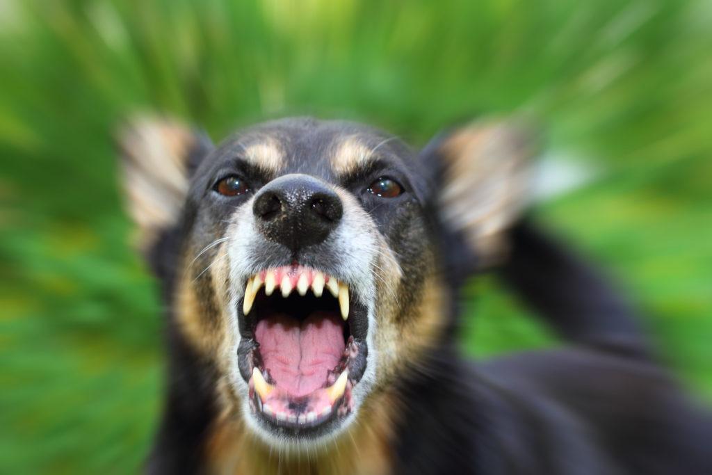 California Judgment Enforcement: dog-bite-lawsuit-california-small-claims-court